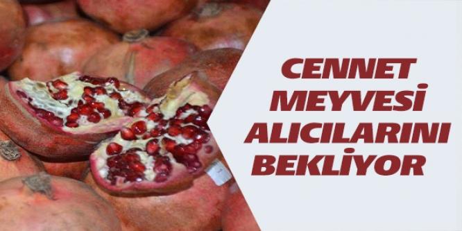 CENNET MEYVESİ ALICILARINI BEKLİYOR
