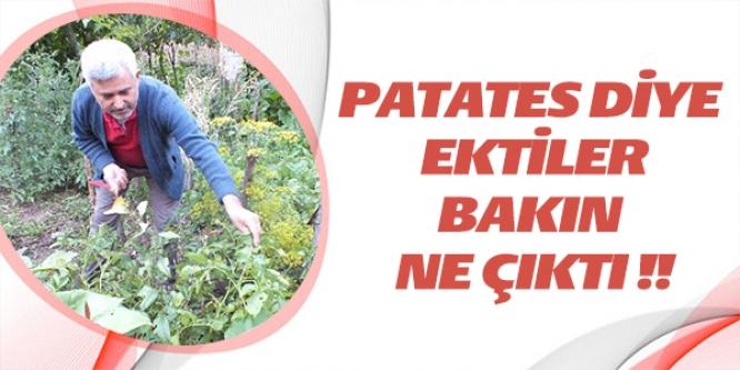 PATATES DİYE EKTİLER BAKIN NE ÇIKTI !!