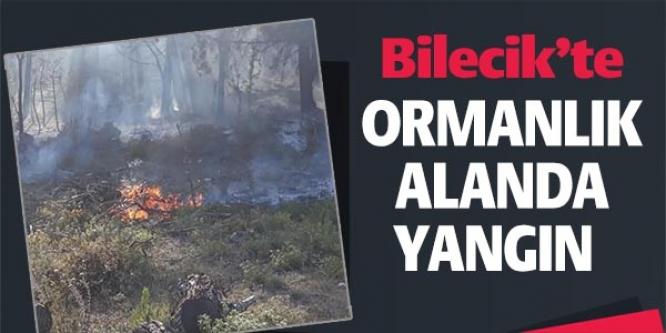 BİLECİK'TE ORMANLIK ALANDA YANGIN