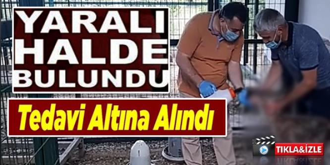 YARALI HALDE BULUNDU BİLECİK'TE BULUNDU