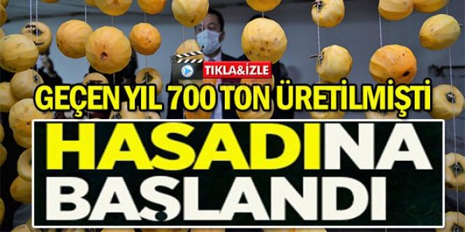 HASADINA BAŞLANDI