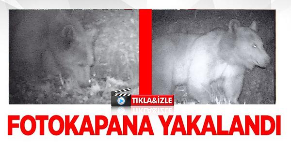 FOTOKAPANA YAKALANDI