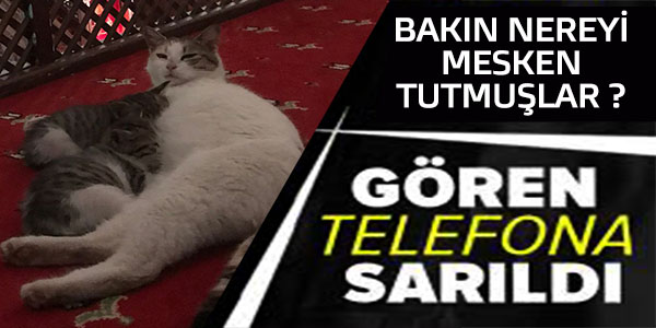 GÖREN TELEFONA SARIDI