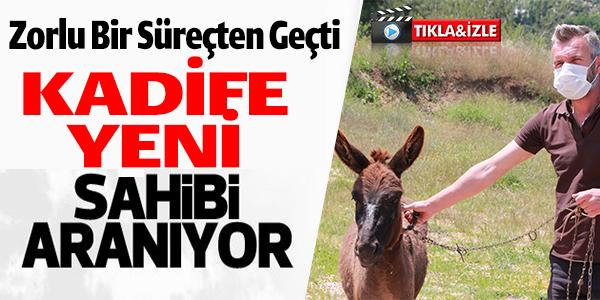TEDAVİSİ TAMAMLANAN 'KADİFE' YENİ SAHİBİNİ BEKLİYOR