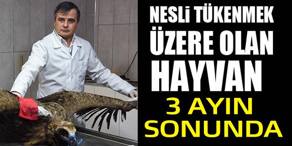 TÜRKİYE'DE SADECE ONLARCASI KALDI