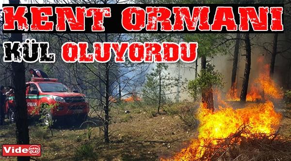 BİLECİK KENT ORMANI'NDA ÇIKAN YANGIN KORKUTTU