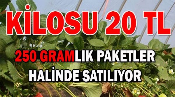 KİLOSU 20 TLDEN SATILIYOR