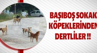 BAŞIBOŞ SOKAK KÖPEKLERİNDEN DERTLİLER !