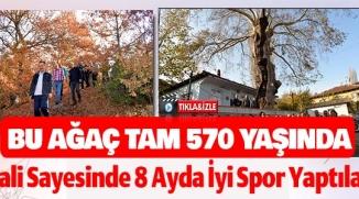 BU AĞAÇ TAM 570 YAŞINDA