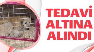 TEDAVİ ALTINA ALINDI