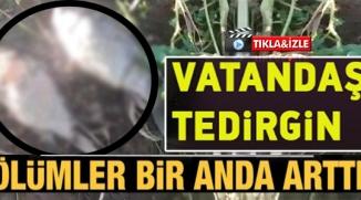 VATANDAŞ TEDİRGİN !