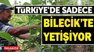 TÜRKİYE'DE SADECE BİLECİK'TE YETİŞİYOR