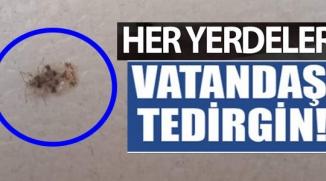 VATANDAŞ TEDİRGİN!