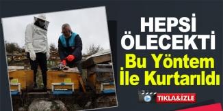 """ARI KOLONİSİNDE """"VARROA"""" HASTALIĞI TESPİT EDİLEN ÜRETİCİNİN ARILARI KURTARILDI"""