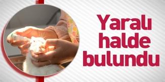 YARALI HALDE BULUNDU