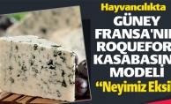 HAYVANCILIKTA GÜNEY FRANSA'NIN ROQUEFORT KASABASI MODELİ