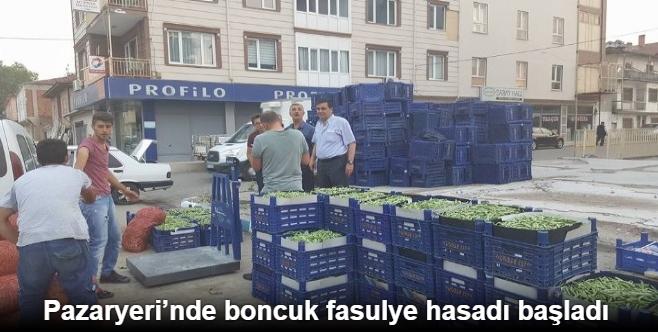 PAZARYERİ'NDE BONCUK FASULYE HASADI BAŞLADI